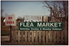 buy one dog, get one flea (colorfulexpressions) Tags: signs dogs fence 6ws sixwordstory benjaminfranklin fleamarket fleas quotation nodogs lrp colorfulexpressions