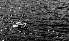 Es Camp De Mar (bortescristian) Tags: travel sea camp vacation holiday beach water canon de photography eos rebel mar photo spring spain mare foto fotografie may picture mai imagine es apa dslr mallorca cristian majorca spania plaja poza mediteranean primavara 500d maiorca mediterana  2013 xti bortes   bortescristian cristianbortes turcuaz       vatanta   maorka
