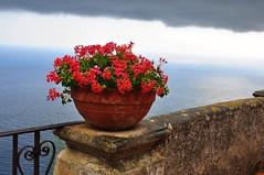Impression (friedrichfrank1966) Tags: kste italien amalfikste see mittelmeer flower blumen coast 24105 nikon mediterraneansea sea mauer stone wall muro view aussicht vista railing gelnder topf