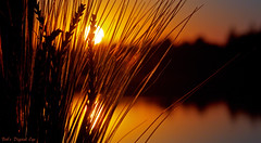 Tranquility (Bob's Digital Eye) Tags: bobsdigitaleye canon canonefs55250mmf456isstm flicker flickr laquintaessenza lake landscape natre plant serene silhouette sky sunset t3i water