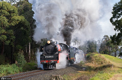 Working Hard (Dobpics O'Brien) Tags: traralgon drouin steam steamrail srv special rail railway railways r761 r711 victorian victoria vr engine locomotive train