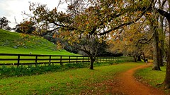 Cornwall Park (~Inspire~Me~) Tags: samsung note note4 4 landscape park general mobile art cornwall auckland one tree hill onetreehill life~asiseeit paradise newzealand new zealand north island sky wall walk spring green clouds beautiful beauty grass fence