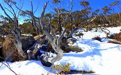 SNOW SHADOWS (elliott.lani) Tags: mount mountain mountwellington landscape