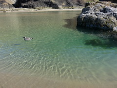 seagull spa (carolyn_in_oregon) Tags: oregon pacificocean ecolastatepark coast crescentbeach