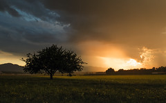 Storm meets the sun (Dejan Hudoletnjak) Tags: storm sunset sun landscape combination tree nature natural earth slovenia world powerofnature power sunray surreal