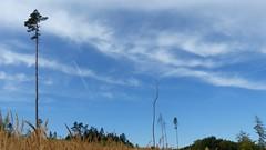 Blue Sky bei Schöneberg im Hunsrück