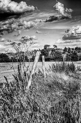 Broken Fence (nigdawphotography) Tags: fence field crop crops farm arable verge essex post posts