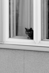 Kissa ikkunassa (kimblenaattori) Tags: cat kissa ikkuna window rmc tokina 400mm f56