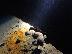 Nudibranqio en SS Thistlegorm (albastandby) Tags: nudibranquio ssthistlegorm wreck thistlegorm redsea nocturna marrojo buceo dive