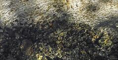 Dance of the sun (KF-Photo) Tags: bach bachlauf gnningerseen genkingen gerll kristallklar steine wasserstrukturen wiesaz