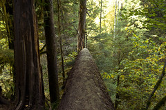 Log Walk *Explore* (gwendolyn.allsop) Tags: forest trees log hike adventure fun outdoors oregon usa