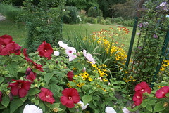 Walk In The Garden (grandpaspix) Tags: iowa garden sony a100 dt 35561870mm