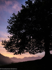 LREd-1160077 (cospic7) Tags: pyrenees france pyrenean lescun dawn sky mist tree trees wood