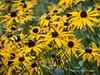 Clyne Gardens 2016 09 30 #1 (Gareth Lovering Photography 3,000,594 views.) Tags: clyne gardens botanical swansea wales flowers trees shrubs park olympus stylus1s garethloveringphotography