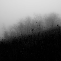 Lakeside Fog 045 (noahbw) Tags: d5000 nikon abstract autumn blackwhite blackandwhite bw fog foggy hills landscape light minimal minimalism mist misty monochrome natural noahbw prairie quiet shadow shore shoreline silhouette square still stillness trees