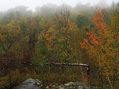 Beginnings of Fall (Devthor) Tags: superiorhikingtrail sht hiking north shore duluth overlook mist woods forest fall