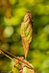 hello autumn (RudaPhoto) Tags: atclose flower kwiaty blossom closeup petals macro macrodream macrophoto macrophotography makro nature garden ogrd zblienie poland meadow polska nikkor 105mm f28 nikon d7100