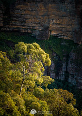 Grose Tree_.jpg (Gary Hayes) Tags: australia sunsrisesunset grosevalley landscape cloudscapes newsouthwales bluemountains