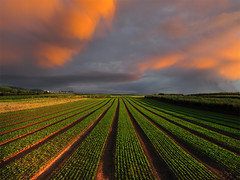Evening Fields (Batikart) Tags: autumn light sunset sky urban plants black green nature field leaves lines weather clouds canon germany landscape geotagged outdoors deutschland evening abend vanishingpoint leaf salad europa europe peace shadows herbst landwirtschaft natur pflanzen felder himmel wolken tranquility sunny vegetable september growth lettuce rows asparagus fields production agriculture ursula blatt landschaft salat variation cultivation rucola diagonale sander spargel arugula g11 fellbach badenwrttemberg swabian 2011 100faves 2013 200faves erucasativa viewonblack 300faves 400faves batikart bestcapturesaoi canonpowershotg11 201305 cultivationareas