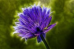 Eclairage floral (Emmanuel Cateau) Tags: fleur fractal emmanuelcateau canon eos 600d