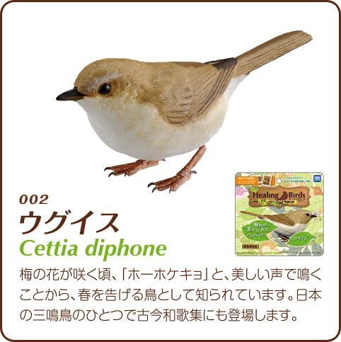 療癒神作「Healing Birds」推薦!