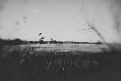 A Field in Brick (lily.szabo) Tags: blackandwhite bw blur field newjersey movement nj marsh jerseyshore oceancounty tse lightroom wideopen tiltshift nocolor vsco vscofilm
