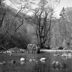 L'îlot aux arbres noirs (Tonton Dave) Tags: trees 6x6 nature water monochrome river landscape switzerland eau suisse kodak tmax rivière hasselblad arbres paysage vaud gorgesdelorbe lesclées