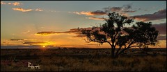 Thelangerin Sunset (Mark-Cooper-Photography) Tags: road sunlight tree silhouette clouds canon one australia single nsw lone 5d outback 2711 hay plains sunrays 1740mm murrumbidgee ef1740mmf40lusm hayplains haynsw 5dmarkiii markcooperphotography thelangerin
