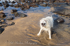 _A5B5210-3.jpg (w11buc) Tags: sea beach scotland waves aberdeenshire stcombs