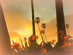 Heisler Park -- Laguna Beach California (Along the way...) Tags: sunset lagunabeachcalifornia mygearandme blinkagain rememberthatmomentlevel1 rememberthatmomentlevel2 rememberthatmomentlevel3