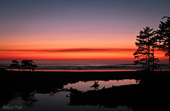 Another Olympic Sunset (San Francisco Gal) Tags: ocean sunset reflection tree nature water silhouette landscape washington nationalpark pacific olympicpeninsula lagoon kalaloch mygearandme mygearandmepremium mygearandmebronze mygearandmesilver mygearandmegold mygearandmeplatinum mygearandmediamond