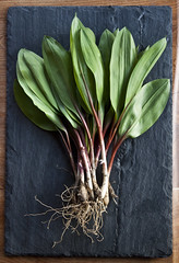 Ramps! (Diana Pappas) Tags: wild stilllife usa newyork vertical spring ramps wildfood foraging wildleeks alliumtricoccum dsc0126 wildedibles