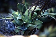 Velvia 50 2534 (bunn) Tags: film 35mm slidefilm wildflowers e6 naturewalk fujichromevelvia50 canoneos1v canonef70200mmf4lisusm parrottsferry walkonthewildflowerside canoneos1vthefordcrownvictoriaofcameras bunaentumblr