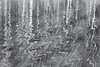 Drowned birches (Monique vd Hoeven) Tags: abstract reflection movement belgie ardennen birches berk reflectie voorjaar thierache regniessart