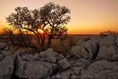 African Sunset Over the Etosha Plains (Wizard of Wonders) Tags: africa sunset wild tree art grass leaves silhouette rocks african branches fineart fine dry plains volcanic namibia acacia etoshapan etoshanationalpark africanacaciatree