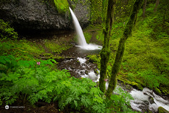 Pony Tail Falls (Timescapes.us) Tags: flowers oregon moss canyon columbiariver waterfalls cascades mthood pacificnorthwest streams hoodriver columbiarivergorge volcanicrock ponytailfalls nationalscenicarea timescapes wahclellafalls lushlandscape bernardchen
