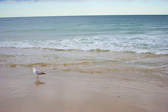 beach 10 (Hey_Lee! Photography) Tags: ocean new sea summer seagulls beach water seaside sand waves nj jersey
