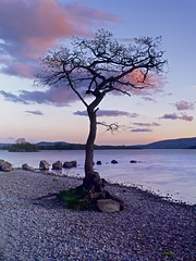 Millarochy Bay and Loch Lomond (Christopher Swan) Tags: longexposure pink trees sunset water clouds scotland spring highlands cool calm serene loch lomond lochlomond lonetree millarochybay