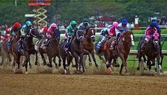 2011 Kentucky Derby (Derby Gal) Tags: horses kentucky racing horseracing thoroughbred horserace kentuckyderby racehorses horsesports horsesrunning