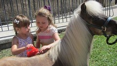 Pony Storytime (SJCPLS) Tags: kids hastings stjohnscountypubliclibrarysystem