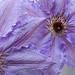 blossom003_0518_4551