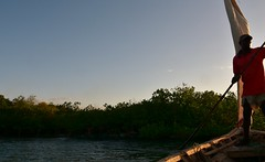 Dhow negotiating mangroves at Kilwa Kisiwani on return voyage (8) (Prof. Mortel) Tags: tanzania dhow mangroves