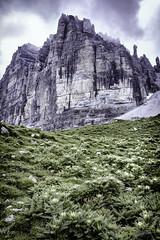 Greenerie to the feet of a mountainface (Steve P Photography) Tags: plants green mountains mountain rock wall greenerie fauna desaturated look nik collection nikon hiking travel photography fotografie wandern bergteigen berg gebirge alps alpen