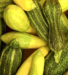 Summer Squash (Posterized Photo) (randubnick) Tags: art photograph photography foodphotography digitallymodified posterized painter summersquash