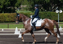 160911_NSW_D_Champs_Medium_5101.jpg (FranzVenhaus) Tags: championships athletes siec dressage newsouthwales australia equestrian riders horses performance event competition nsw sydney aus
