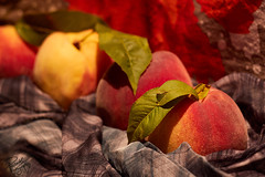 A hint of Autumn (Wergiliusz) Tags: peach order line leaves fabric helios analog orange red yellow colors colorful studio