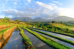 Good morning Jatiluwih Rice Terraces, Bali, Indonesia (Maria_Globetrotter) Tags: 2016 fujifilm indonesia mariaglobetrotter dscf2604 landscape
