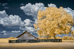 Fenced In (shutterclick3x) Tags: infrared ir barn fauxcolor farm countryside clouds landscape frankloose