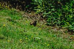 18092016DSC_1064.jpg (Ignacio Javier ( Nacho)) Tags: aves pginafotografia flickr faunayflora santander cantabria espaa es
