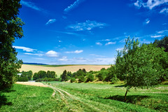 Bright day in South Moravia (Petr Horak) Tags: agricultural agriculture arboriculture clouds color blue green czechrepublic field fujifilmx100 hdr hill landscape nature path rural sky summer x100 yellow moravia